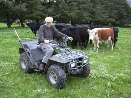 Gordon Clements has been around cattle all his life